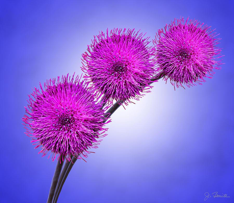 Floral Photograph - Melancholy No. 2 by Joe Bonita