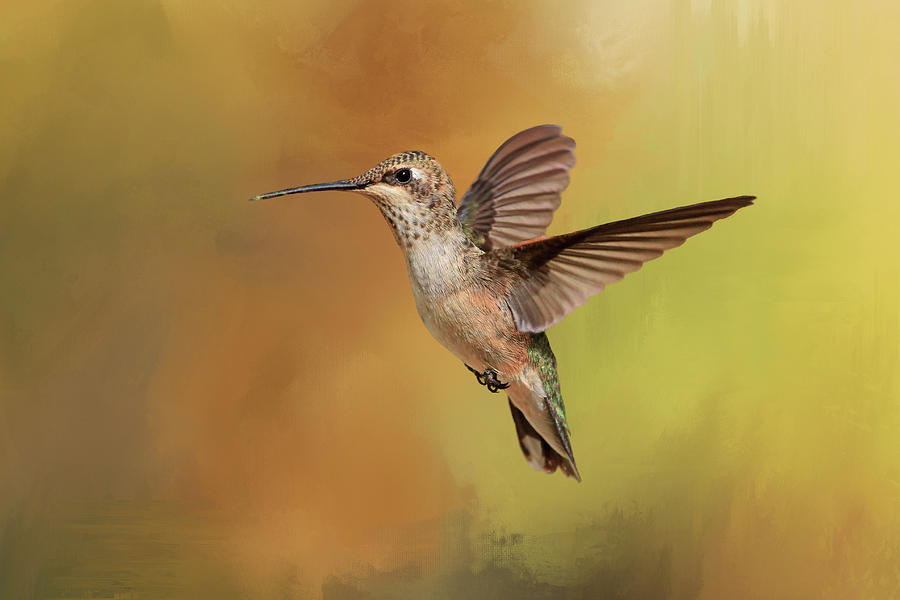 Hummingbird Photograph - Mellow Yellow by Donna Kennedy