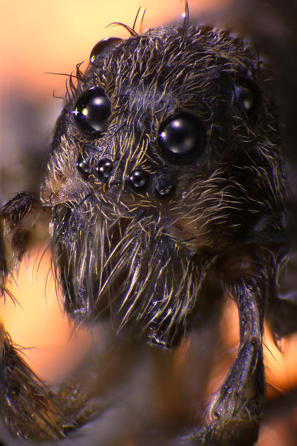 Spider Photograph - Microscopic Spider 005 by Marcus Kett
