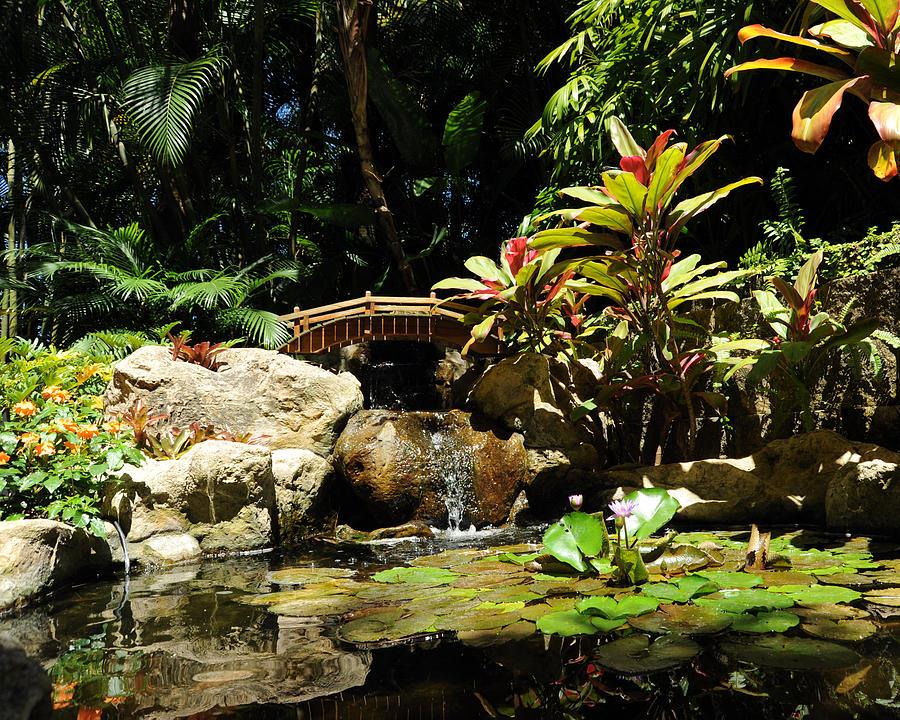 Mini Japanese Garden Photograph By Ralu Photo
