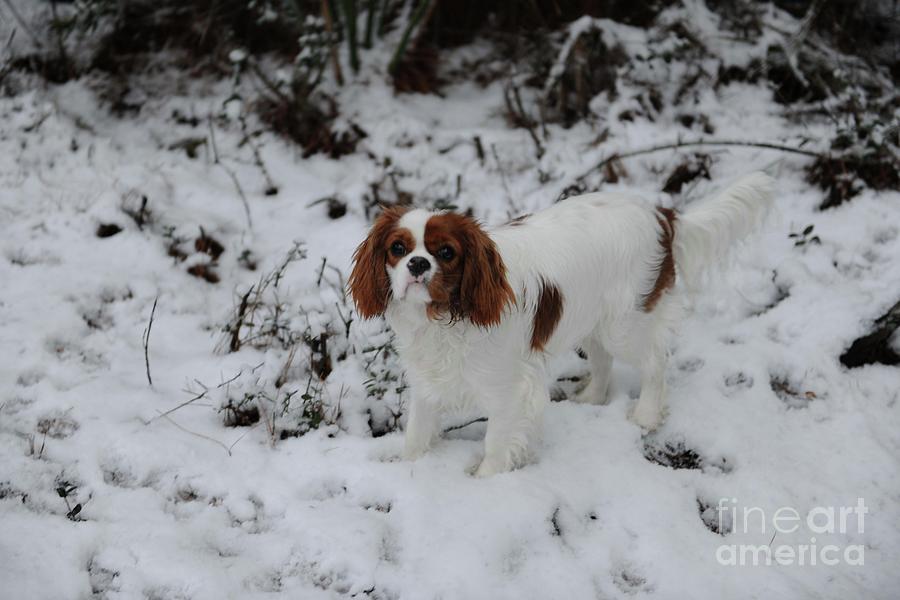 Miss Daisy Enjoying The Snow Photograph