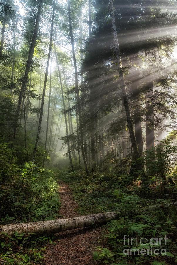 Mist On Last Chance Coastal Trail 3 Photograph