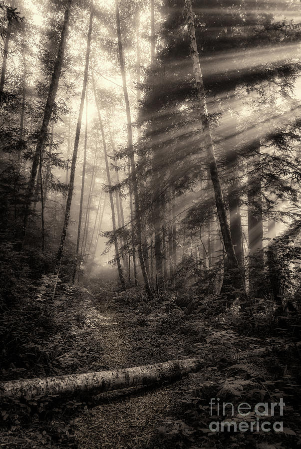 Mist On Last Chance Coastal Trail 3 Toned Photograph
