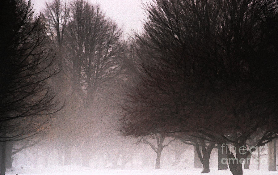 Tree Photograph - Misty by Linda Knorr Shafer