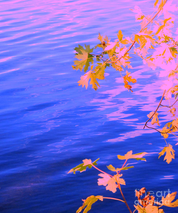 Abstract Photograph - Moment Of Quiet by Sybil Staples