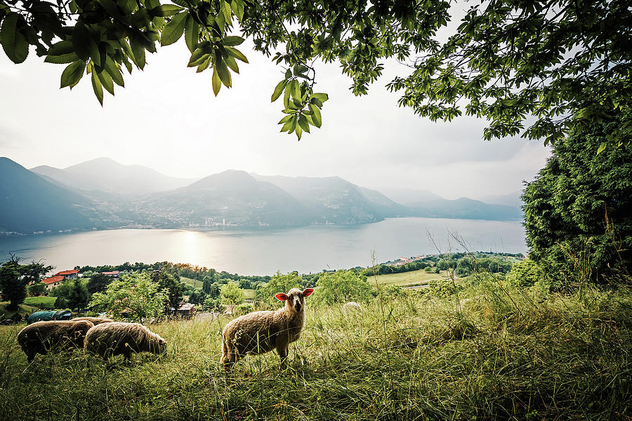 Monte isola lake iseo italy photograph by alexander voss for Alexander isola