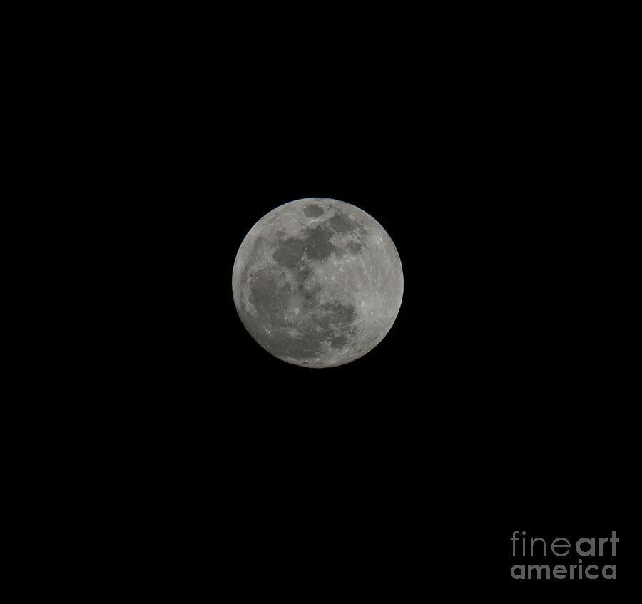 Moon Gaze Photograph