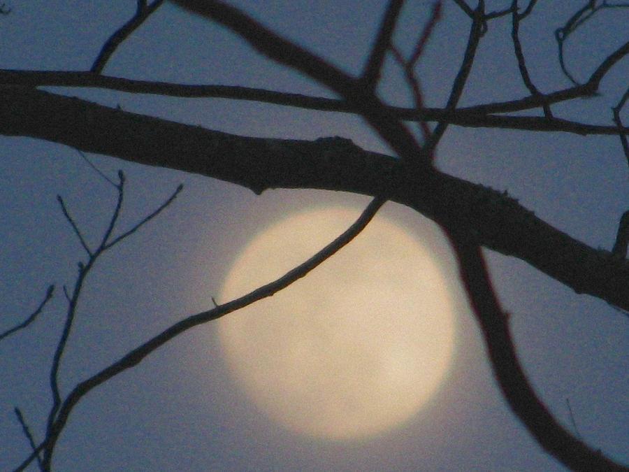 Full Moon Photograph - Moon Glow by Lindie Racz