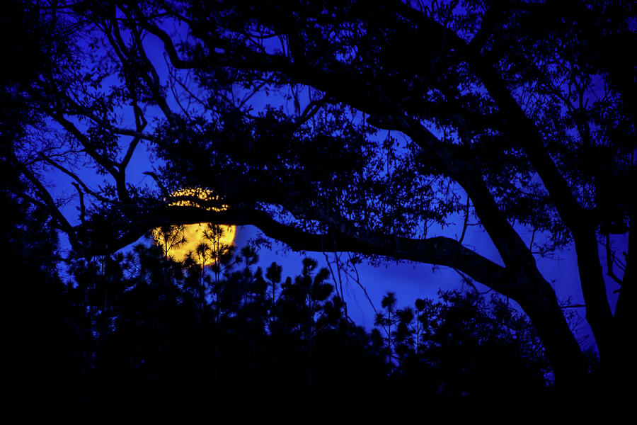 Moon Harvest Photograph