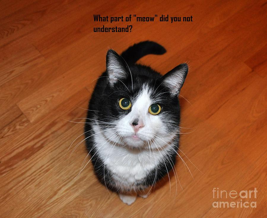 Animals Photograph - More Words From  Teddy The Ninja Cat by Reb Frost