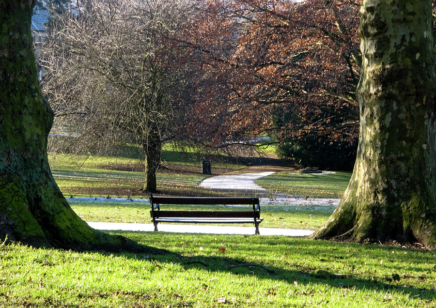 St Andrews Park Bristol Photograph - Morning Bliss by Brian Roscorla