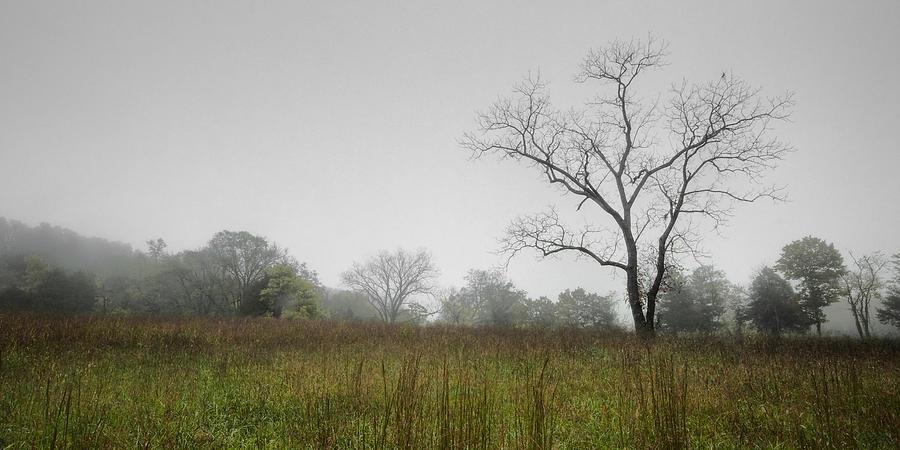 Landscape Photograph - Morning Fog by Ryan Heffron
