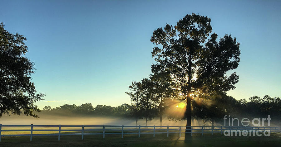 Morning Light Beams Photograph