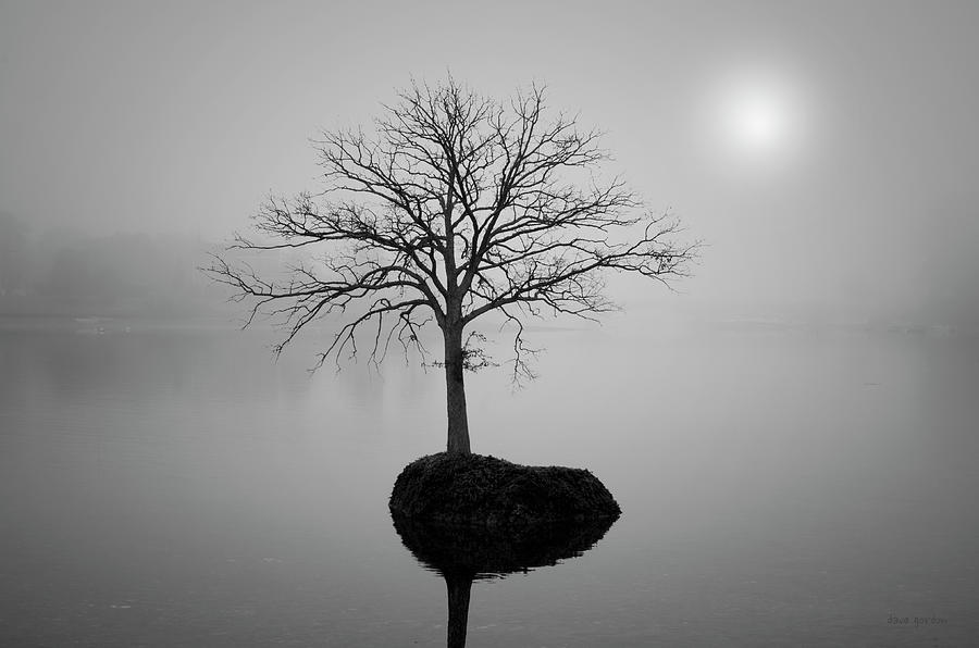 Tree Photograph - Morning Tranquility by Dave Gordon