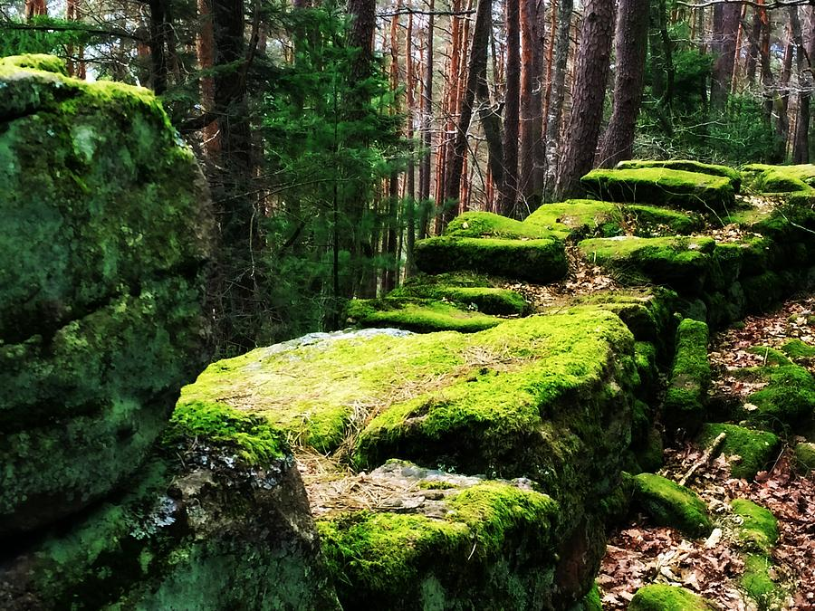 Mossy Wall Photograph