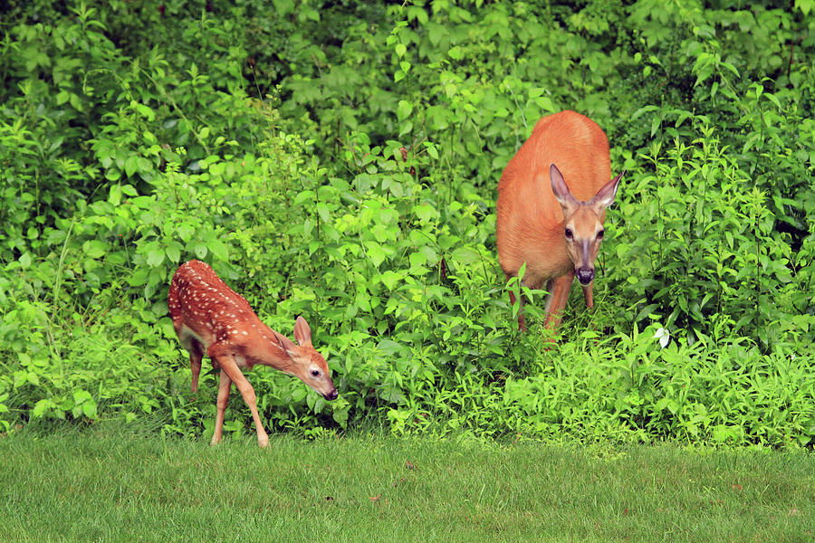 Wildlife Photograph - Mother And Child by Karol Livote