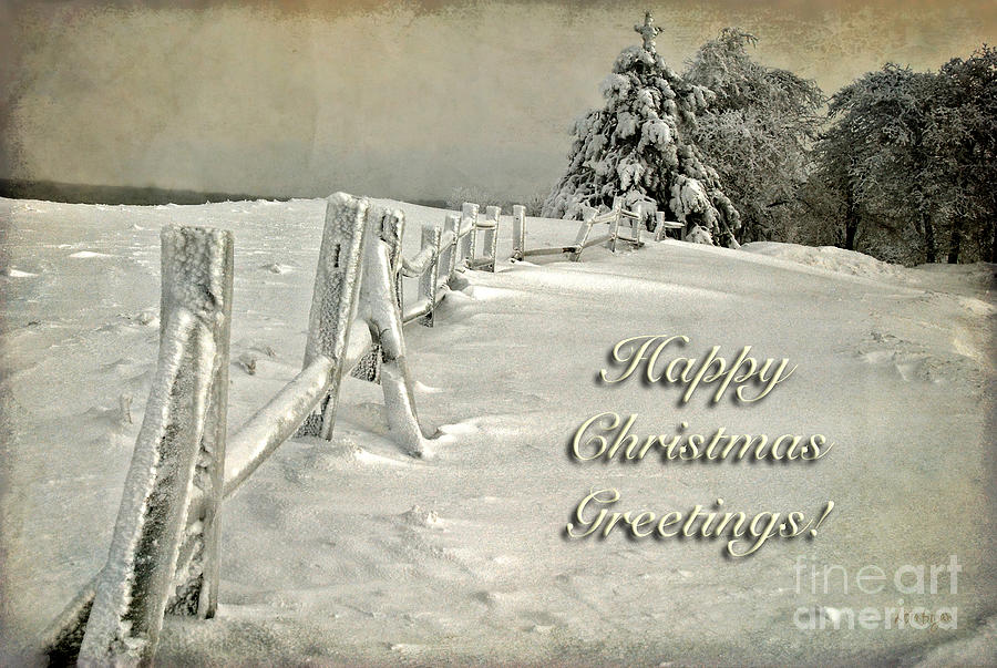 Christmas Photograph - Mother Natures Christmas Tree Card by Lois Bryan