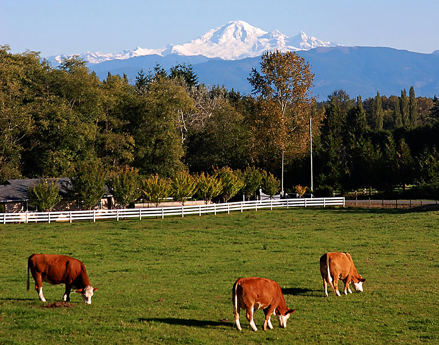 Mount Baker From Langley Bc Photograph