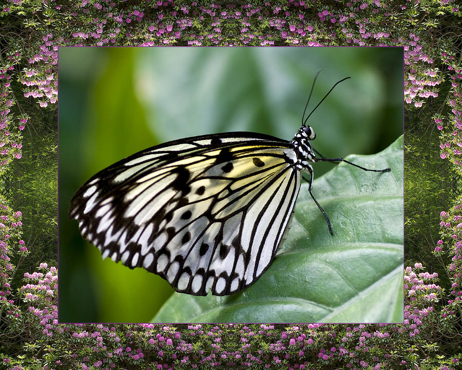 Nature Photos Photograph - Mountain Butterfly by Bell And Todd