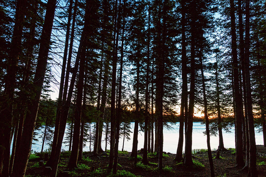 Mountain Forest Lake Photograph