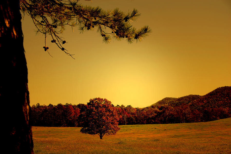 Woods Photograph - Mountain Valley by Nina Fosdick