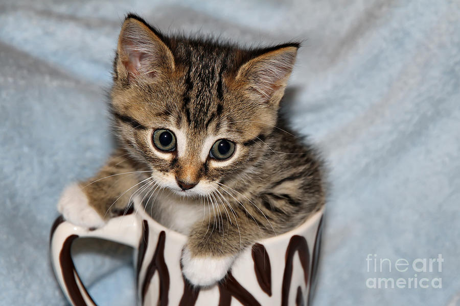 Animal Photograph - Mug Kitten by Teresa Zieba