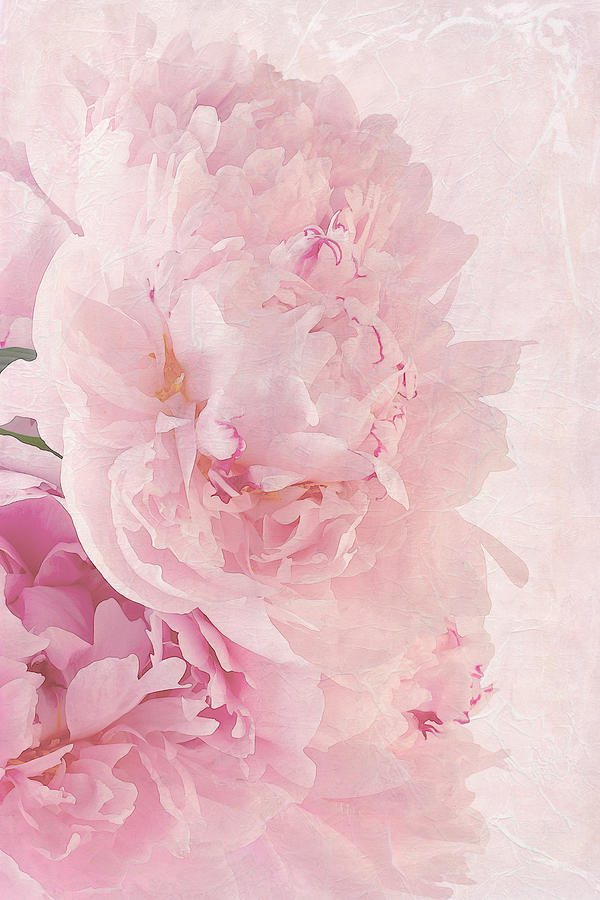 Artsy Pink Peonies Photograph By Sandra Foster