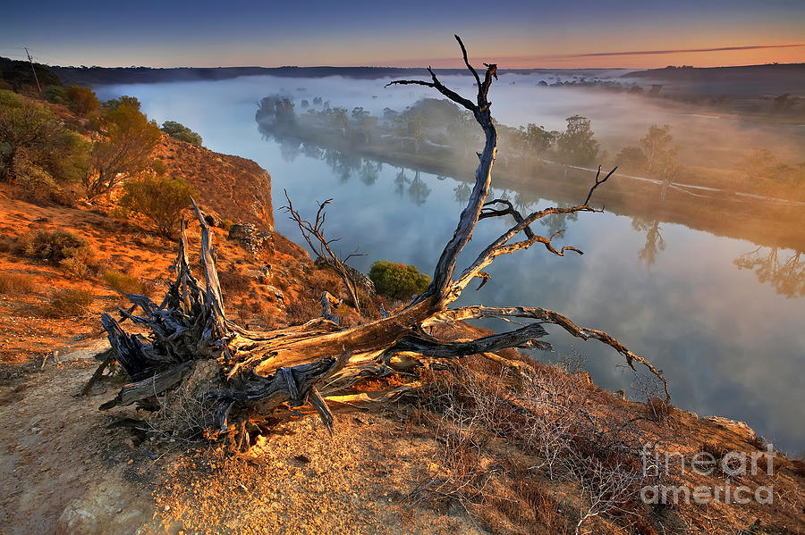 Murray River Dawn Sunrise Mist Misty Fog Foggy Still Serene River Fallen Tree Uprooted Inland Water Early Morning Landscape Landscapes South Australia Australian Photograph - Murray River Dawn by Bill  Robinson