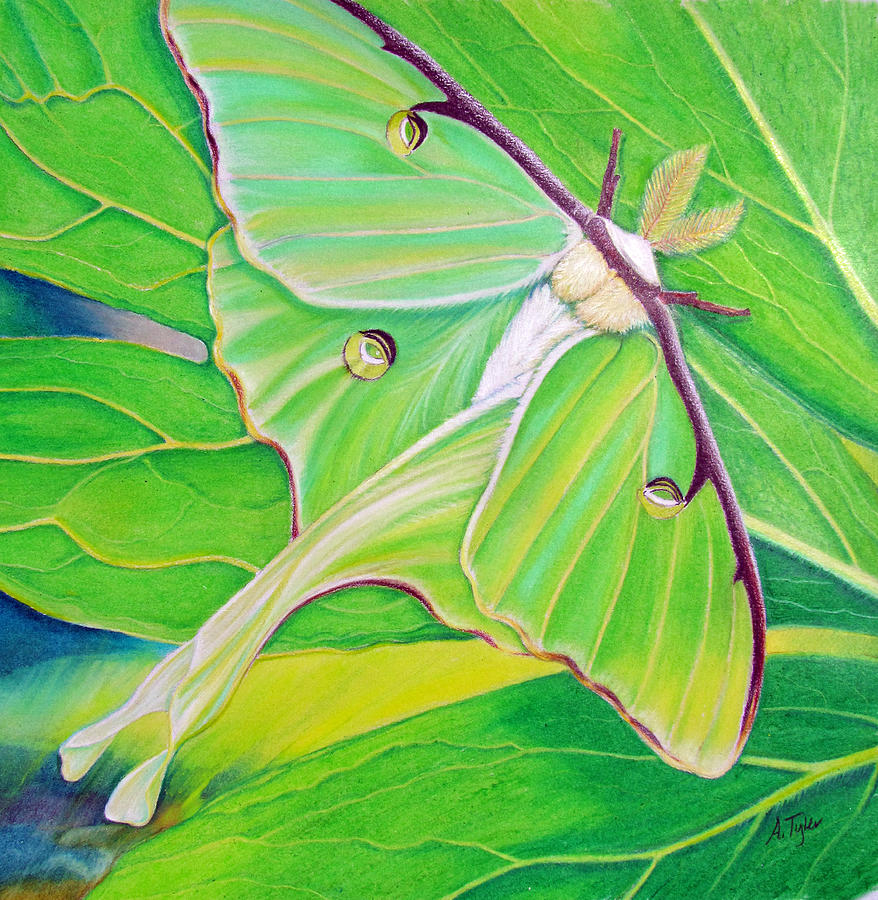 Luna Moth Painting - Must Be Dreaming by Amy Tyler