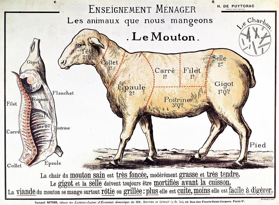 Mutton Drawing