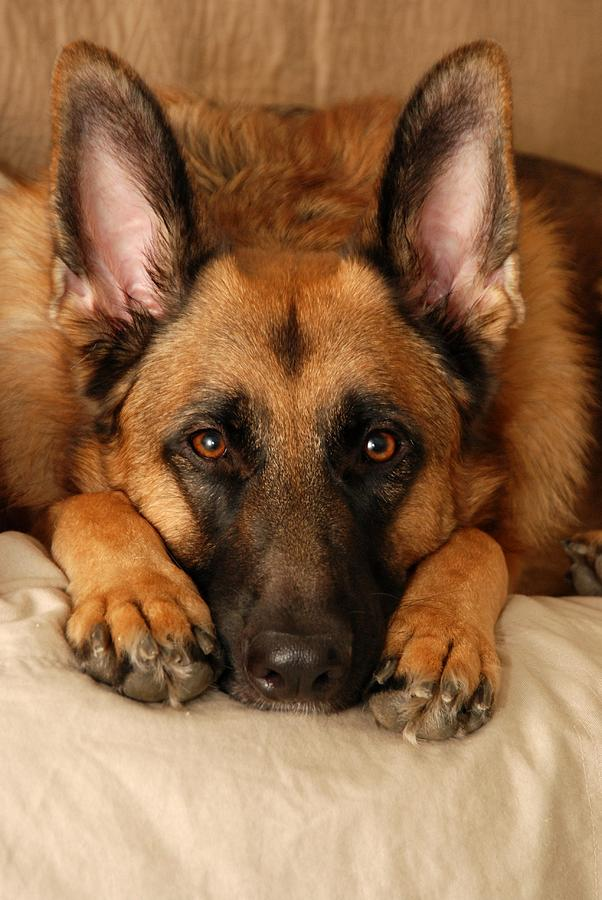 Canines Photograph - My Loyal Friend by Angie Tirado