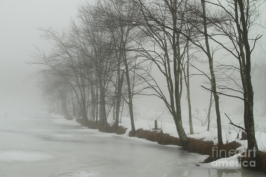 Mysterious Winter  Photograph