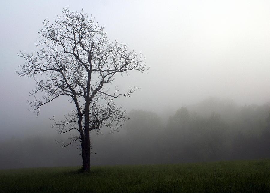 Tree Photograph - Mysty Tree by Marty Koch
