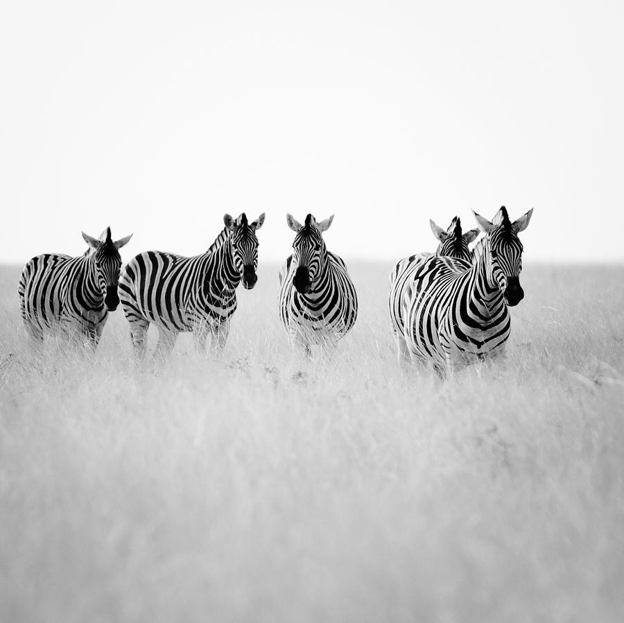 Namibia Zebras II Photograph