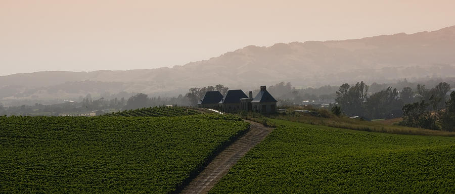 Napa Photograph - Napa Valley by Peter Verdnik