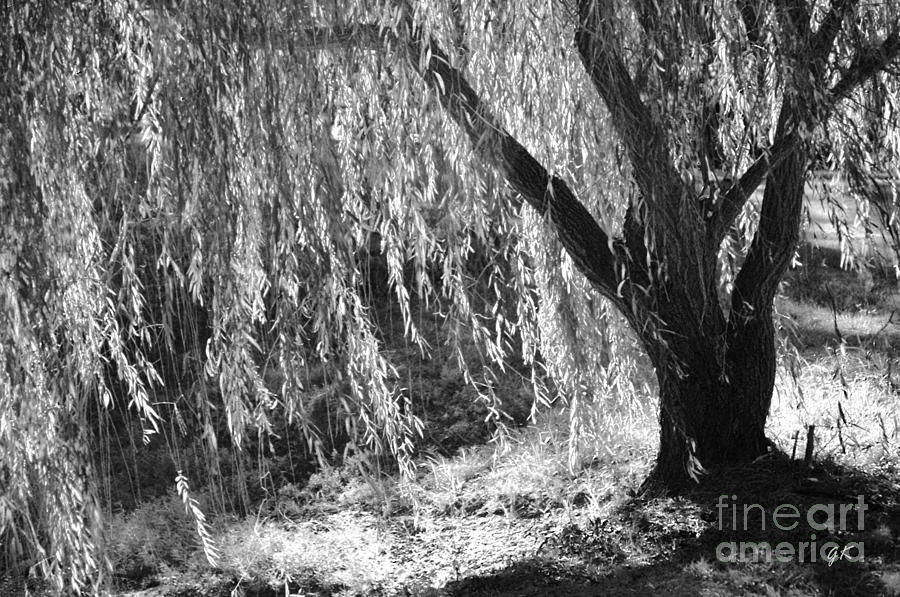 Contemorary Art Photograph - Natural Screen by Gerlinde Keating - Galleria GK Keating Associates Inc