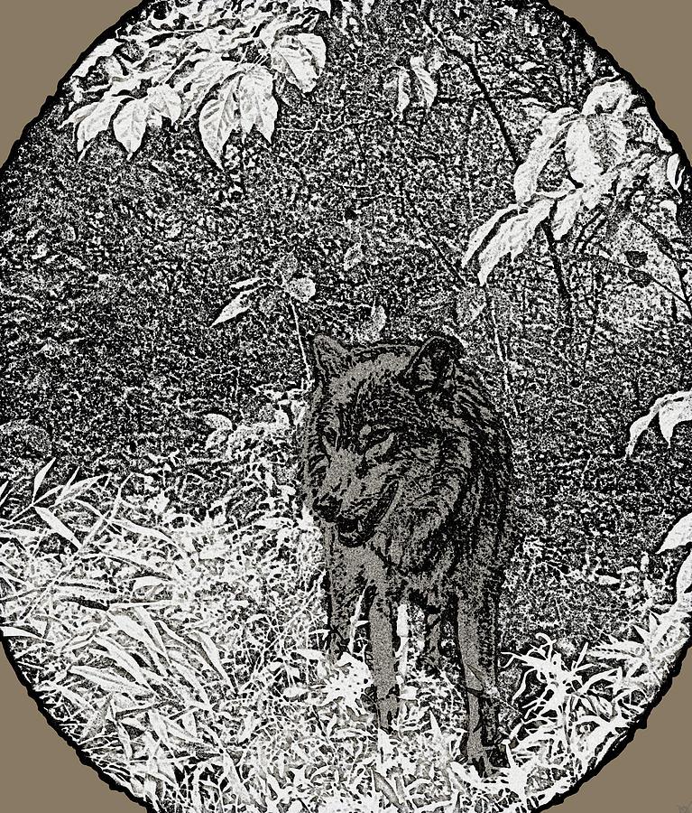 Nature Walk Wolf Drawing - Nature Walk Wolf by Debra     Vatalaro