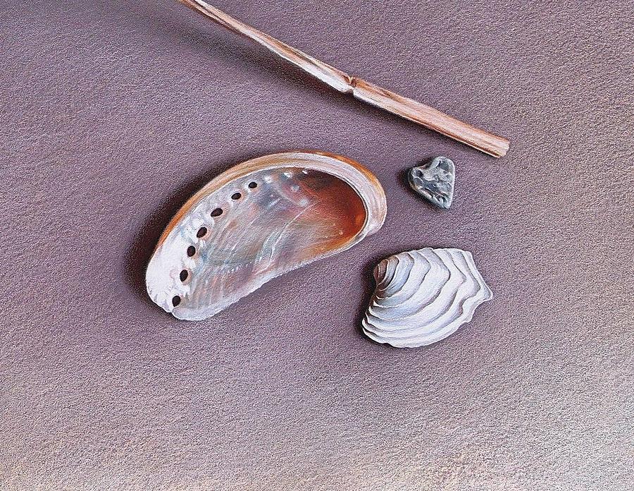 Shells Drawing - Natures Memories - Close-up Detail by Elena Kolotusha