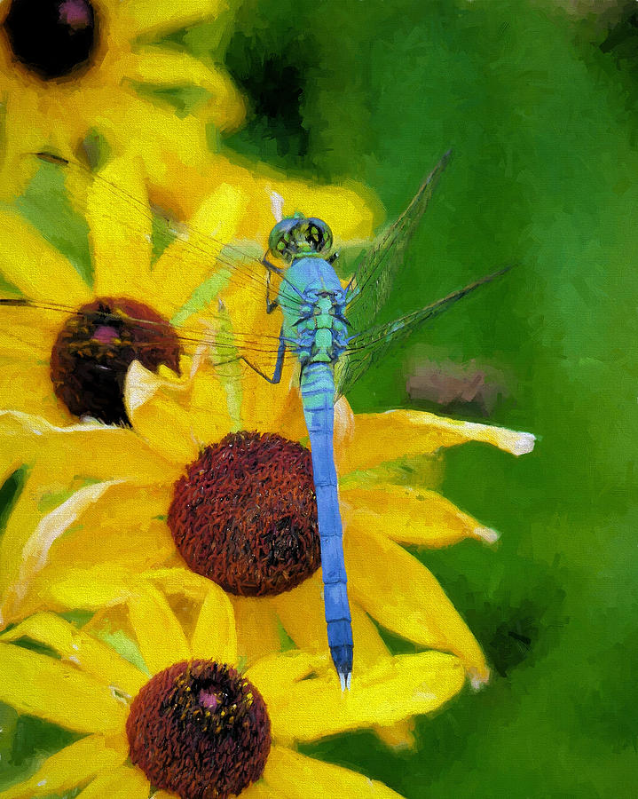Dragonfly Photograph - Neon Pastels by JC Findley