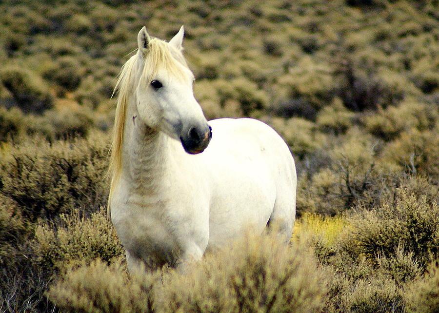 Horses Photograph - Nevada Wild Horses 3 by Marty Koch