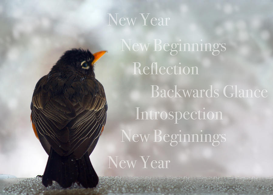 New Years Card Photograph
