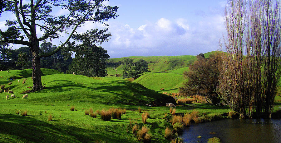 New zealand countryside photograph by steven sanders for Landscaping companies in new zealand
