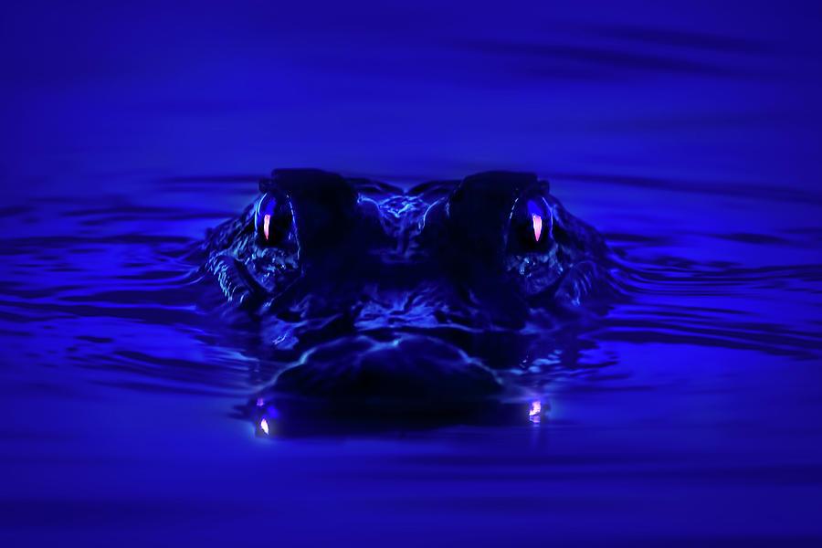 Night Watcher Photograph