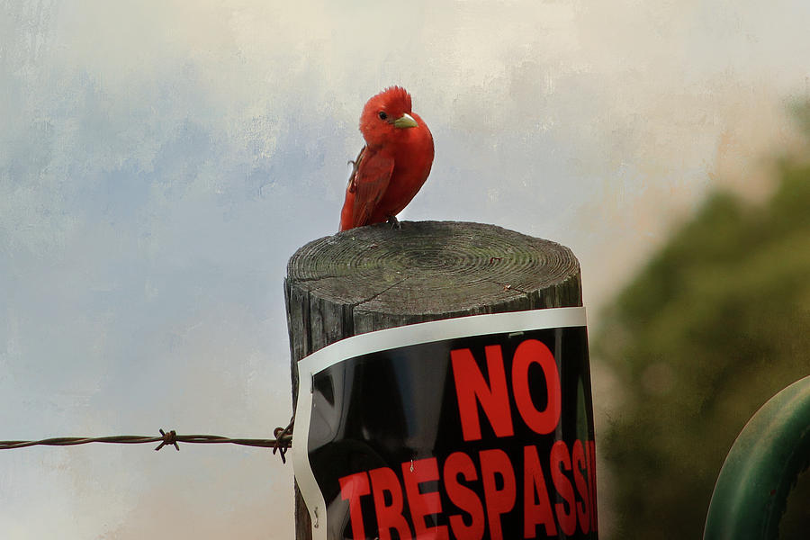 No Trespassing Digital Art
