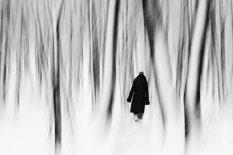 Surreal Photograph - Norwegian Wood  by Floriana Barbu
