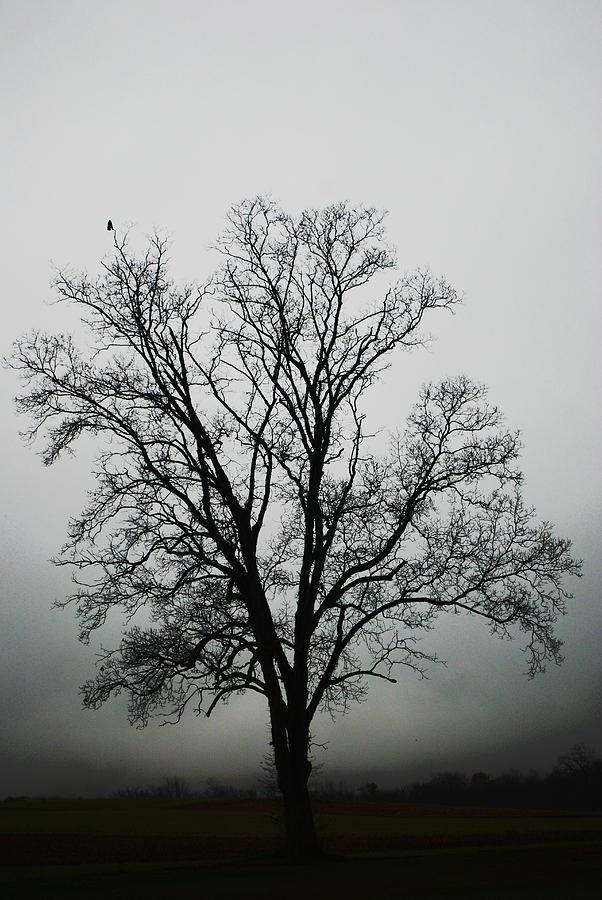 Winter Tree Photograph - November Tree In Fog by Patricia Motley