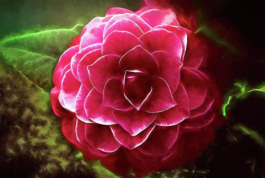 Nuccio 39 s bella rossa camellia photograph by peter hogg for Camelia rossa