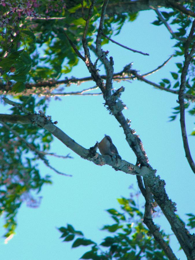 Nereida Bird Nude Photos 35