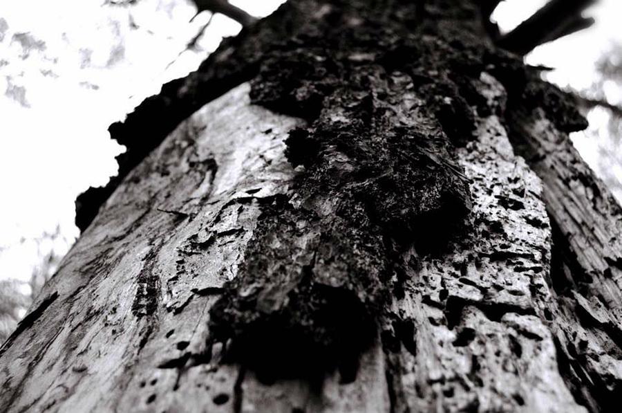 Oak Tree Lowell Ma Photograph By Karyn Regal