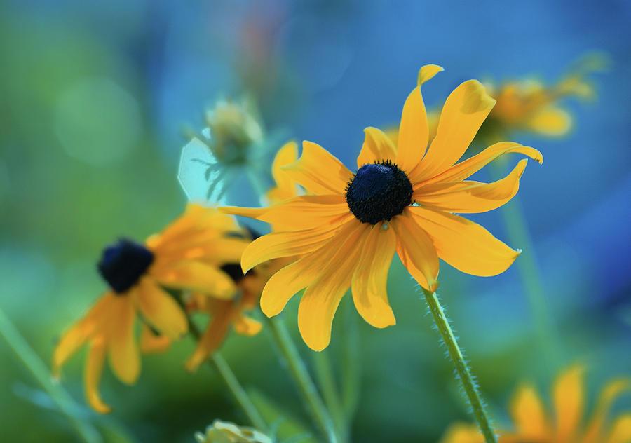 floral Prints Photograph - Ocealum by Aimelle